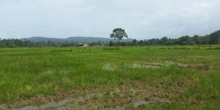 4 hectare Land for sale in Sihanoukville (7)