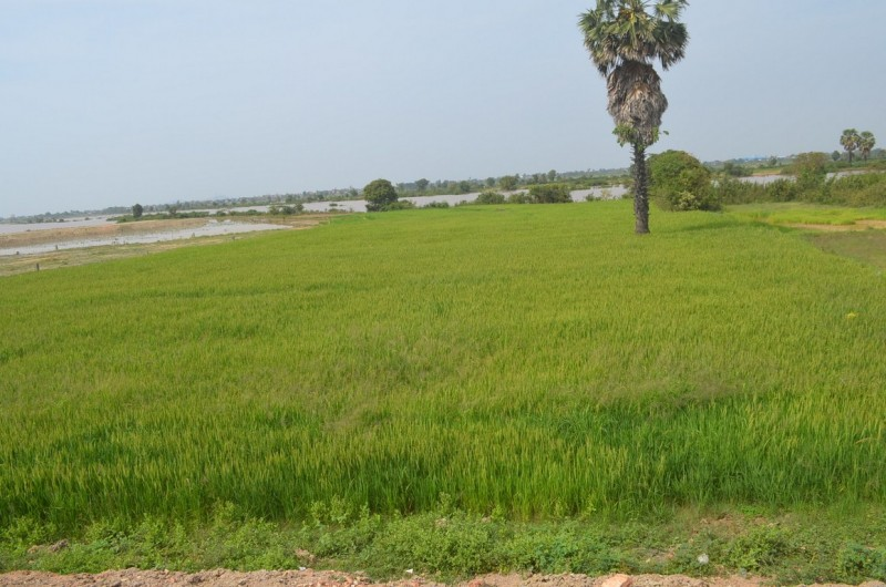 Land for investment for sale near Ly yongphat area