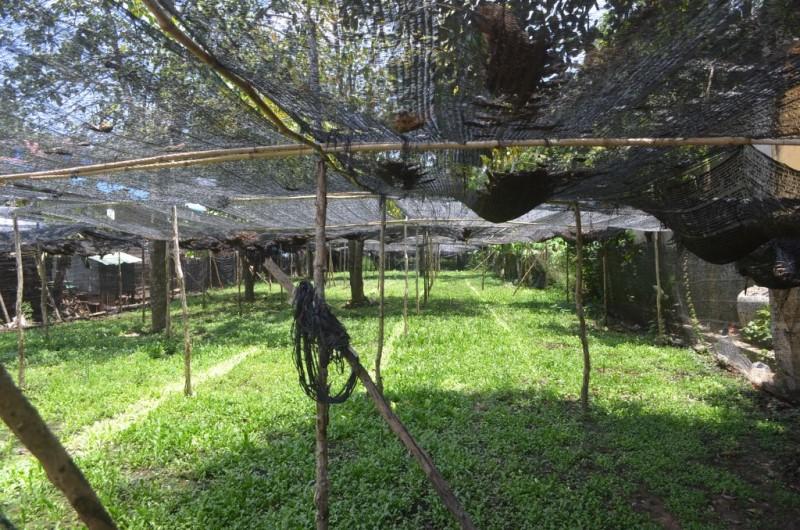 15m X 135m Land For Sale In Praeak Aeng