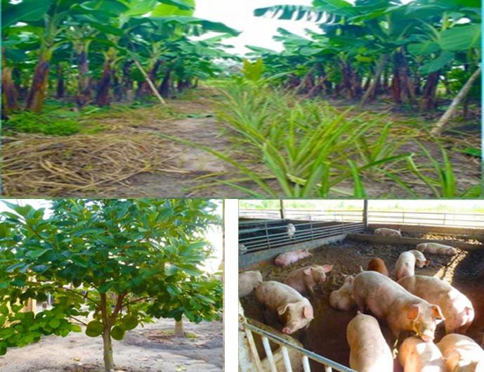 10$/m2 Fruit Farm For sale in Sihanoukville