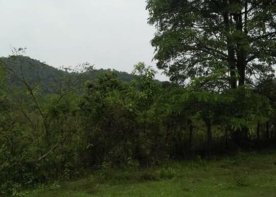 100m X 80m Sea view Land For sale In Kep (5)