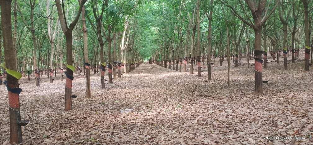 290 Hectares Big Land for Sale in Mundulkiri