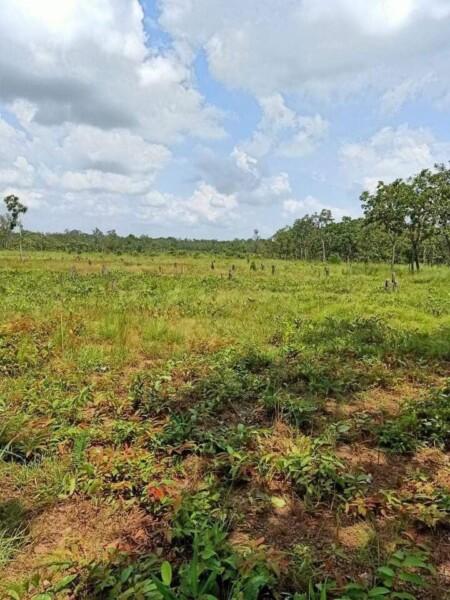 1000 Hectares Big Land for Sale in Mundolkiri